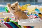 Dog at pool party