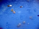 Rain in a pool